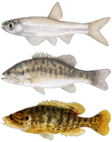 File:FNV Fishes.png