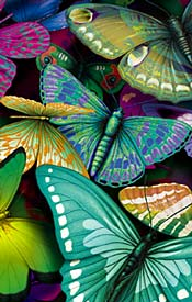 File:Butterflies 1.png
