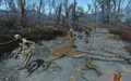 FO4 Herd of ghouls.png