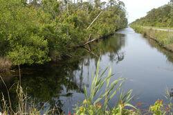 Alligator River