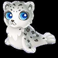 Snow Leopard Seal Juvenile