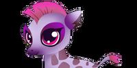 Pygmy Giraffe