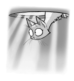 Manhole cat