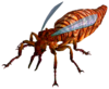 Giant Fire Ant Queen