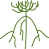 WillowSymbol