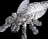 Giant Albino Ant Queen