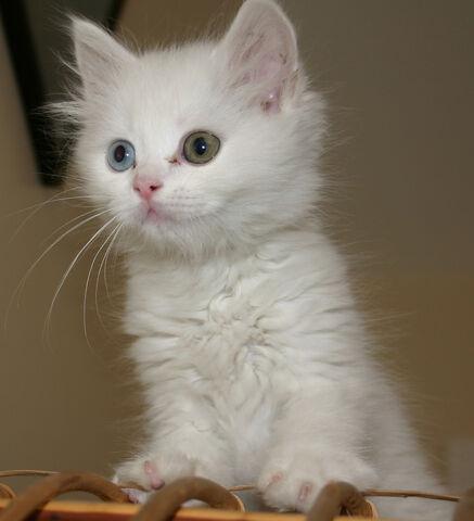 File:Cat.jpg