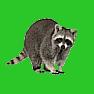Smallmammal icon
