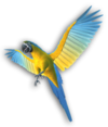 Papagei MKWC