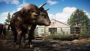Far cry 5 2