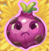 Onion grumpy on hay