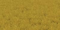 Canola (Farming Simulator 2013)