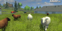 Sheep (Farming Simulator 2013)