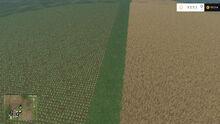 Split Field FS15