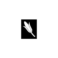 Corn FS15