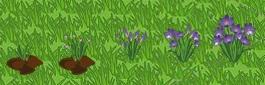 File:Purple Crocus Growth.jpg