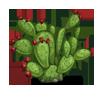 Prickly Pear-icon