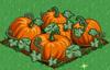 Pumpkin extra100.png