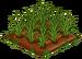 Australian Wheat 66