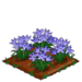 Spring Squill extra100