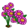 Pink Daisies Full Bloom-icon