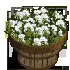 Chinese Cotton Bushel-icon