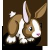 Brown Dutch Rabbit-icon