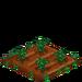 Poinsettia 33