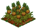 Australian Pineapple 100