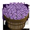 Licorice Plant Bushel-icon