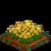 Yellow Roses 100