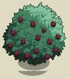 Fig Tree2-icon
