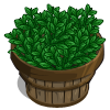 Green Tea Bushel-icon