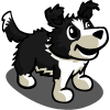 Border Collie Puppy-icon