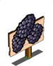 Blackberry Mastery Sign-icon