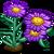 Purple Aster-icon