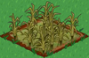 Rice withered.png
