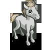 Camargue Foal