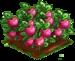Appleberry extra100