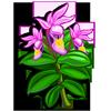 Fairy slipper-icon
