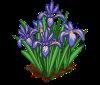 Perfect Iris-icon