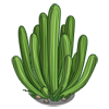 Organ Pipe Cactus-icon