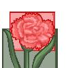 Pink Carnation-icon
