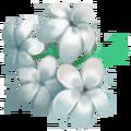 Blackhaw Flower.png
