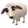 Baby Daglic Sheep