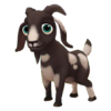 Baby Spotted Boer Goat