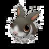 Baby White Rabbit
