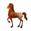 Appaloosa Horse.png