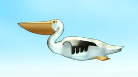File:Pelican 1.jpg