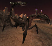 Canyon Scorpion